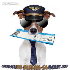 Пошук квитків на літак